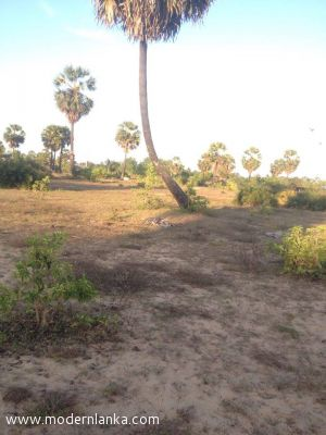 Bare Land for Sale at Batticaloa - Batticaloa