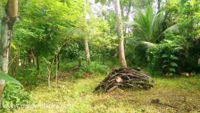 Coconut Land (Estate) for Sale at Kadawatha - Gampaha