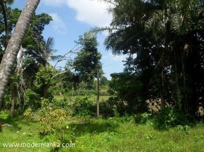 Coconut Land (Estate) for Sale at Habaraduwa - Galle