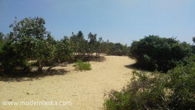 Coconut Land (Estate) for Sale at Kalpitiya - Puttalam