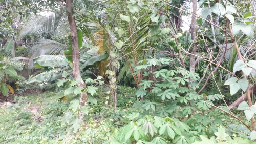 Bare Land for Sale at Kalagedihena - Gampaha