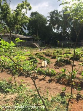 Bare Land for Sale at Minuwangoda - Gampaha