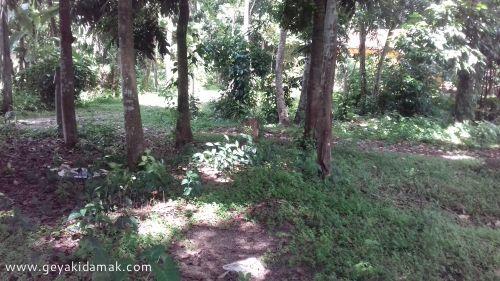Coconut Land (Estate) for Sale at Veyangoda - Gampaha