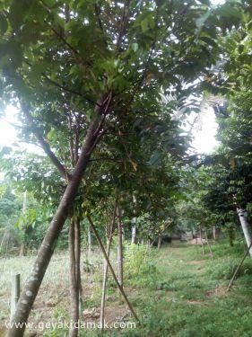 Agricultural Land for Sale at Horana - Kalutara