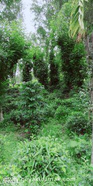 Tea Land (Estate) for Sale at Alawatugoda - Kandy