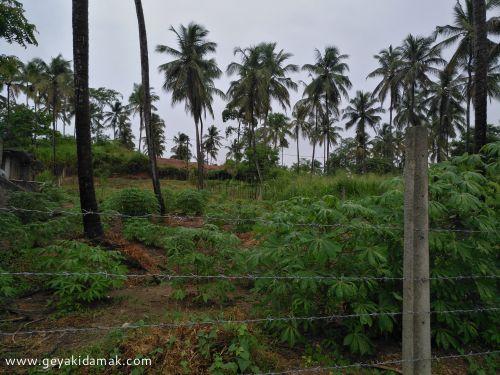 Commercial Land for Lease at Mallawapitiya - Kurunegala