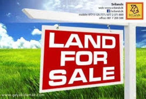 Coconut Land (Estate) for Sale at Nattandiya - Puttalam